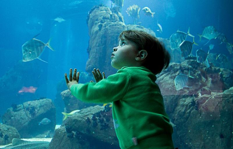 Criança no Oceanário de Lisboa